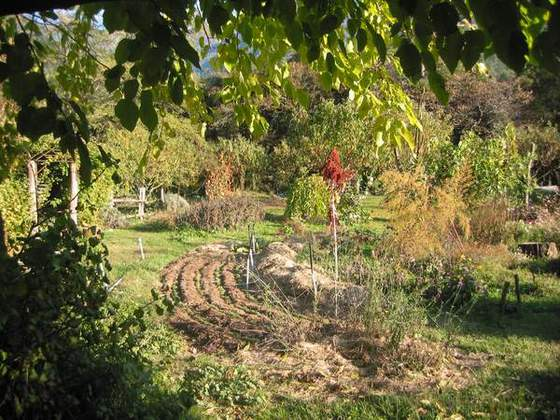 2 - Organic Gardens (View of the garden from the shade of the mulberry tree)