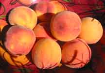 3 - Rosa Peaches (Our Klamath climate is great for peaches!)