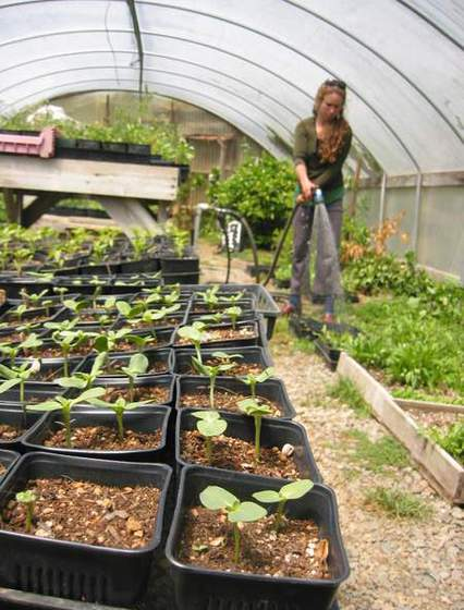 4 - Greenhouse (Liza tends to starts in our greenhouse).jpg