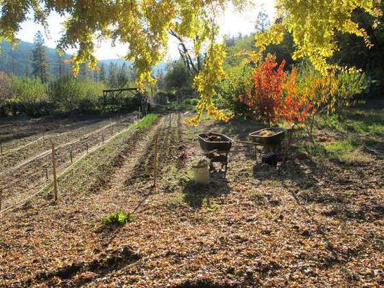 Fall Garden (Riverside organic gardens in the Klamath Mountains)