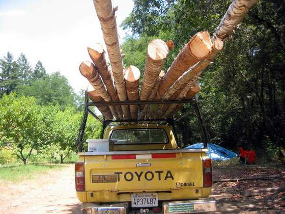 Harvesting Round Poles (Round poles are an excellent natural building material, six times as strong as milled wood the same dimension)