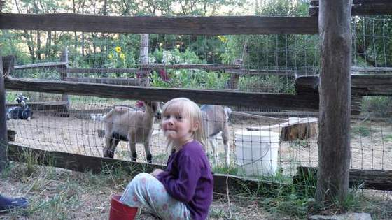 Kids Love Kids! (Goats are a big part of most kid's vacation on the ranch)