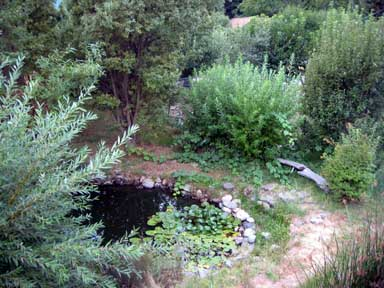 Permaculture Pond (Our pond provides habitat for beneficials such as dragonflies and frogs)