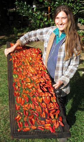 Smoking Peppers for Chipotle(Heather on her way to the smokehouse with jalapenos)