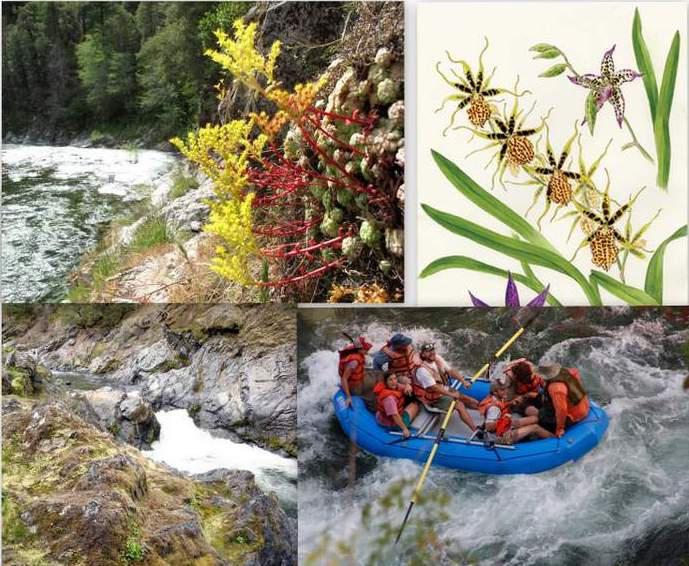 Botanical Illustration, Natural History and Geology of the Klamath River.